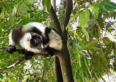 Madagaskar 2019